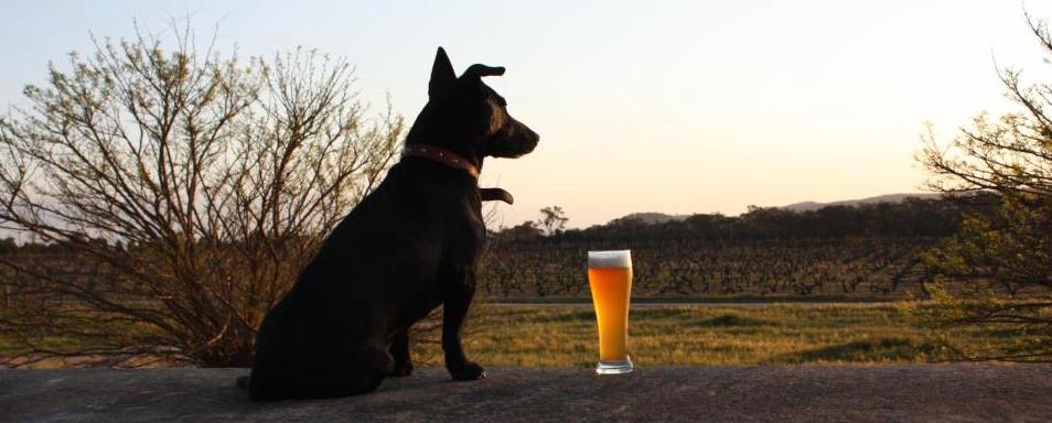 Black Dog Brewery Shop